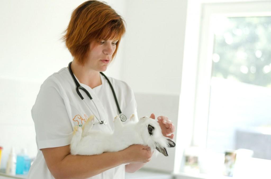 Tierarzt Baunatal Kaninchen