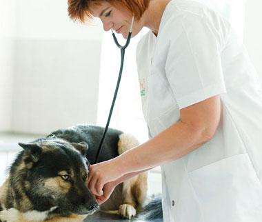 Untersuchung & Diagnostik